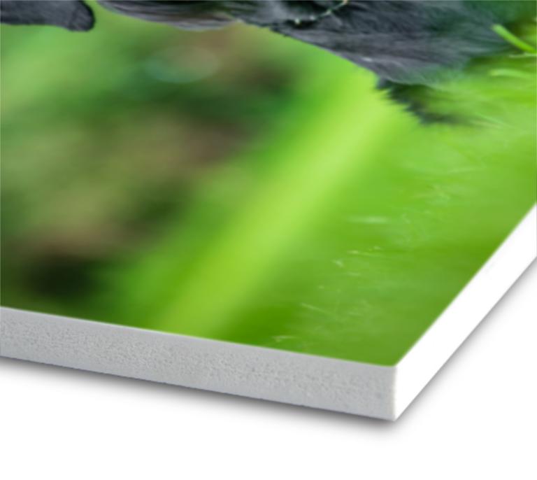 Tiskárna AKORD Chomutov - PVC deska